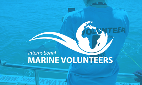 International Marine Volunteers