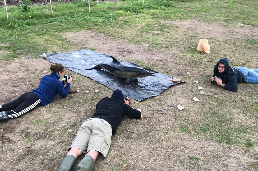 Photogrammetry, BRUVs and Cetaceans! Intern Diary, Entry Thirteen