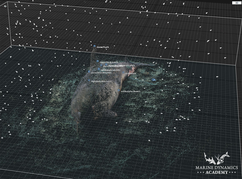 Common Dolphin Point Cloud