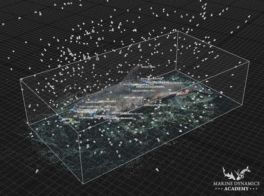 Final Common Dolphin point cloud