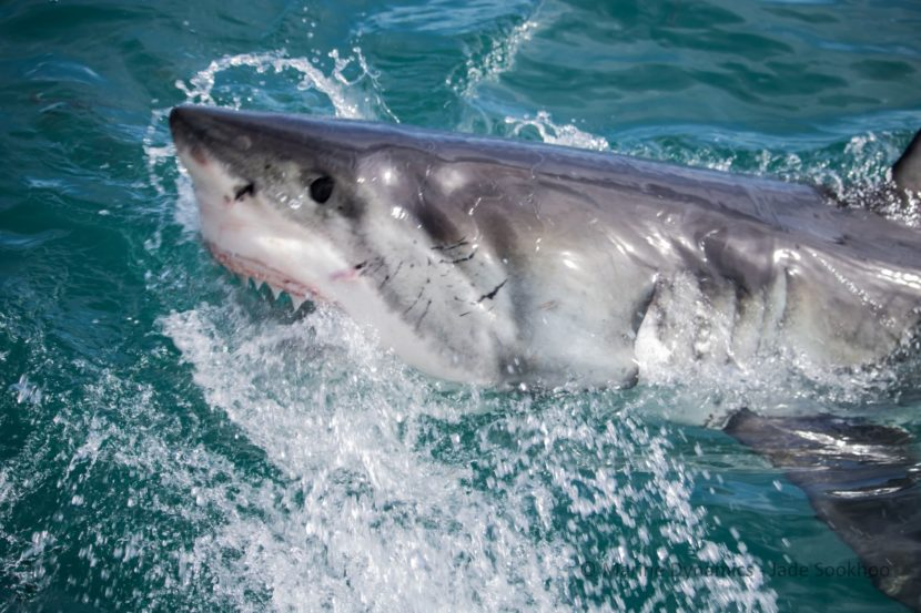 Shark Trips With Interns