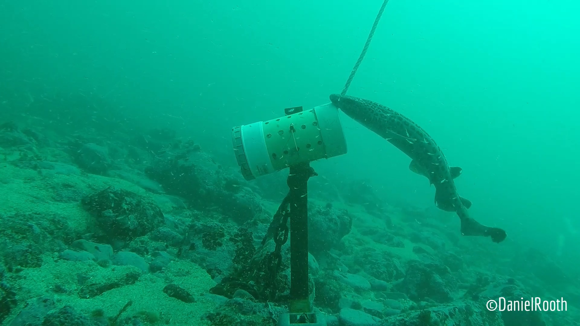 Daniel's BRUV Study yields some interesting results about the small sharks in Gansbaai!