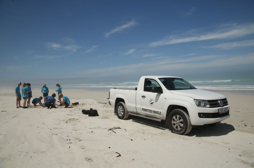Volunteers attend dolphin stranding